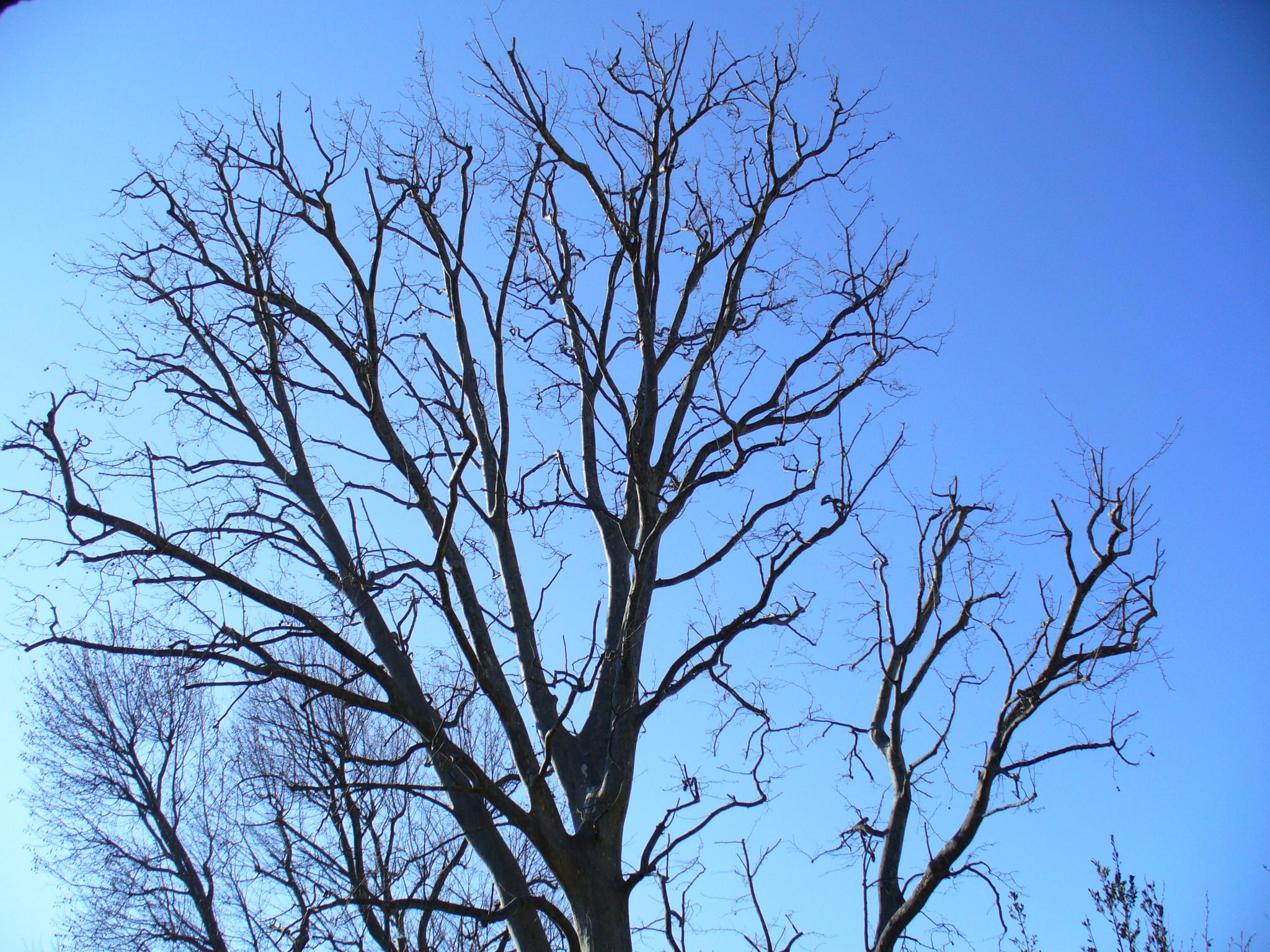Elagage d'arbres sur Villeneuve les Avignon